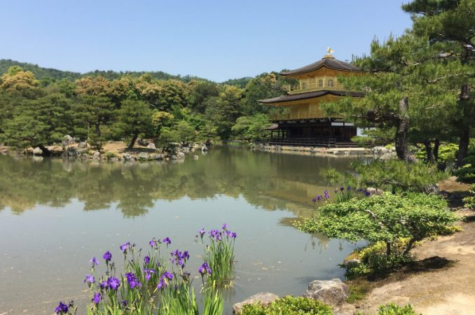 Mein neues Coaching nach dem japanischen Konzept für den Lebenssinn: Finde dein Ikigai.