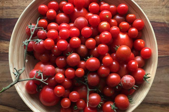 Meine Tomatenpflanzen und die Bedeutung von Geschichten.