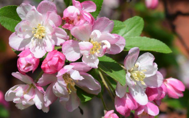 Wie du jetzt schon deinen Garten kultivieren kannst